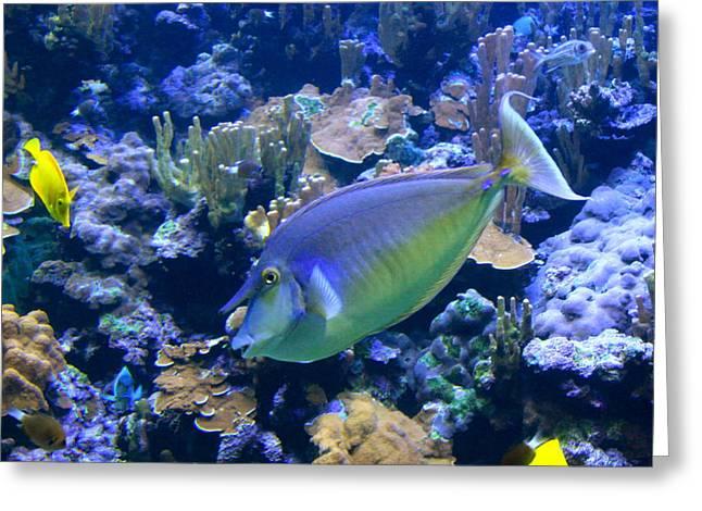Reef Fish Greeting Cards - Bluespine Unicornfish Greeting Card by Karon Melillo DeVega