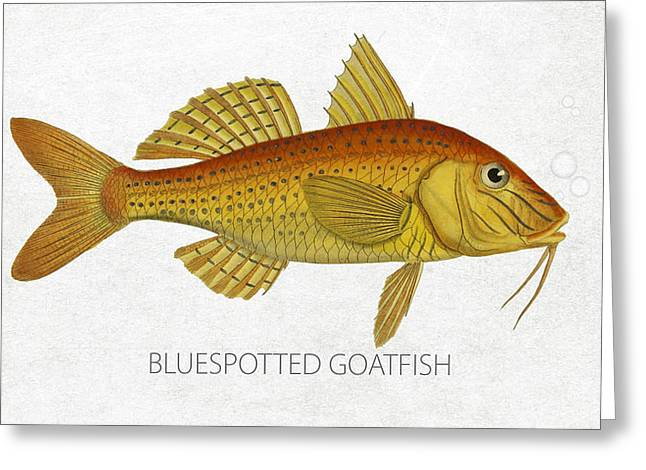 Aquarium Fish Digital Greeting Cards - Bluespotted Goatfish Greeting Card by Aged Pixel