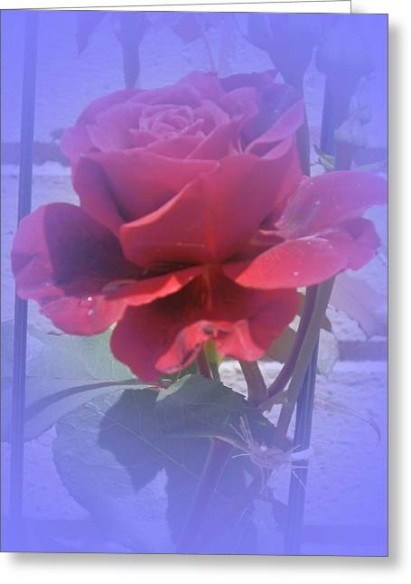 Blooms Greeting Cards - Bluesy Rose Greeting Card by Valerie Bruno
