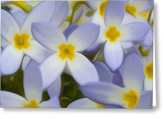 Persuade Greeting Cards - Bluets 2 Greeting Card by Patsy Zedar