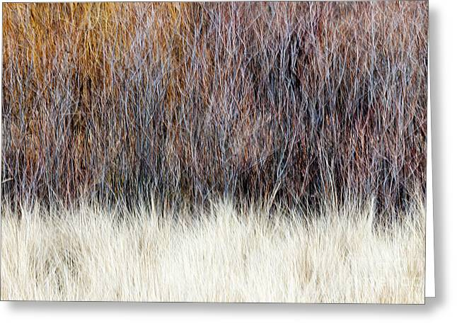 Wintry Greeting Cards - Blurred brown winter woodland background Greeting Card by Elena Elisseeva