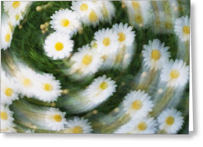 Creativ Greeting Cards - Blurred Daisies Greeting Card by Chevy Fleet