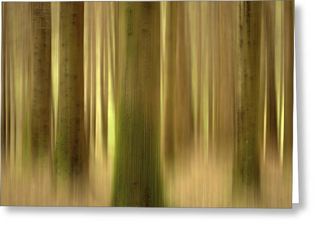 Focus Greeting Cards - Blurred trunks in a forest Greeting Card by Bernard Jaubert