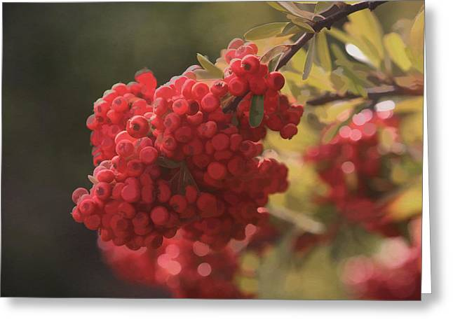 Interior Still Life Digital Greeting Cards - Blushing Berries Greeting Card by Kandy Hurley