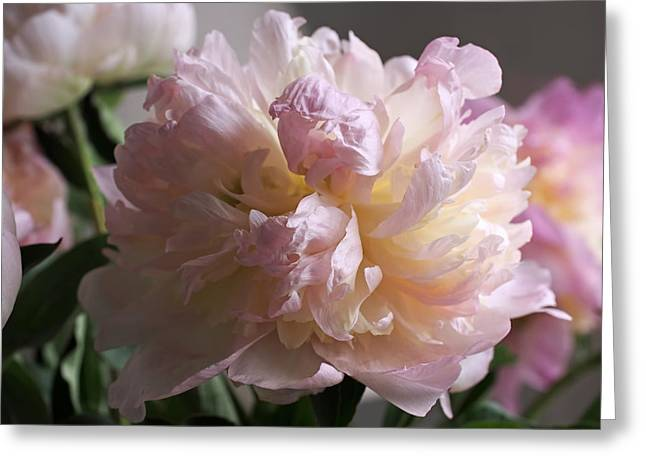 Peony Art Greeting Cards - Blushing Peony Greeting Card by Rona Black