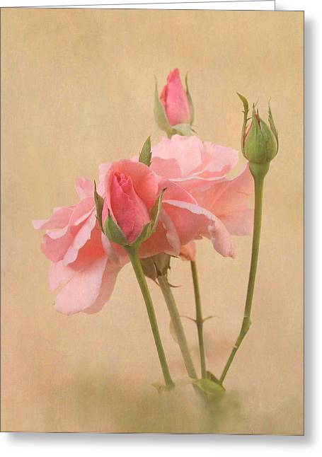 Blushing Pink Greeting Card by Angie Vogel