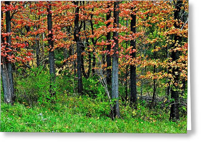 Breezy Greeting Cards - Blustery October Weather Greeting Card by Frozen in Time Fine Art Photography