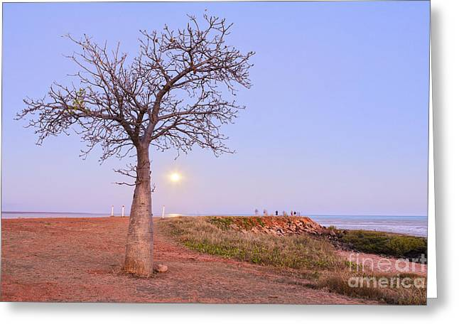 Moonrise Greeting Cards - Boab Tree and Moonrise at Broome Western Australia Greeting Card by Colin and Linda McKie