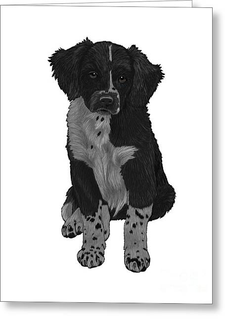 Collie Mixed Media Greeting Cards - Boarder Collie Greeting Card by Karen Sheltrown