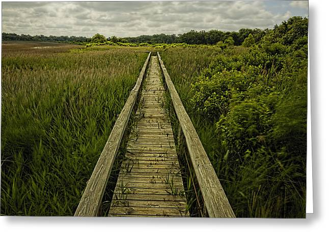 Nature Center Greeting Cards - Boardwalk Into Nature Greeting Card by Jonathan Davison