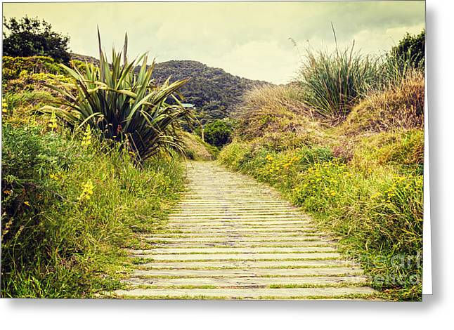 Verdant Greeting Cards - Boardwalk Through Bush New Zealand Greeting Card by Colin and Linda McKie
