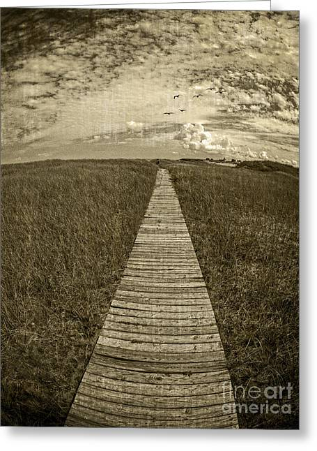 Boardwalk Through The Dunes Greeting Card by Edward Fielding