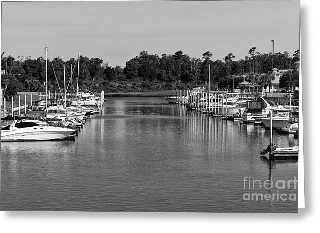 Boats In Harbor Greeting Cards - Boats Lined Up in North Myrtle Beach mono Greeting Card by John Rizzuto
