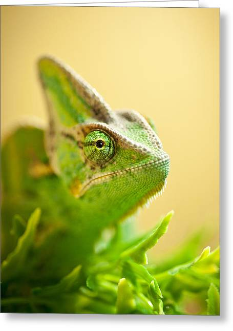Cold Blooded Greeting Cards - Bob the Chameleon  Greeting Card by Samuel Whitton