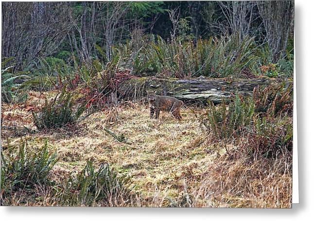Bobcats Greeting Cards - Bobcat at the Edge of the Forest Greeting Card by Peggy Collins