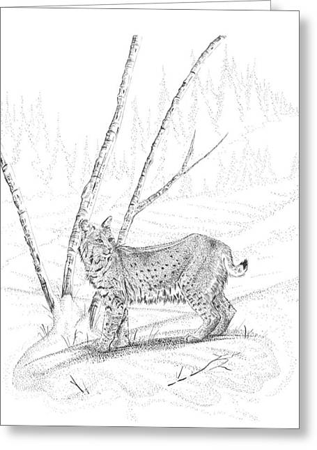 Bobcat Drawings Drawings Greeting Cards - Bobcat Greeting Card by Carl Genovese