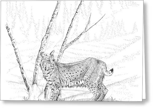 Bobcat Greeting Card by Carl Genovese
