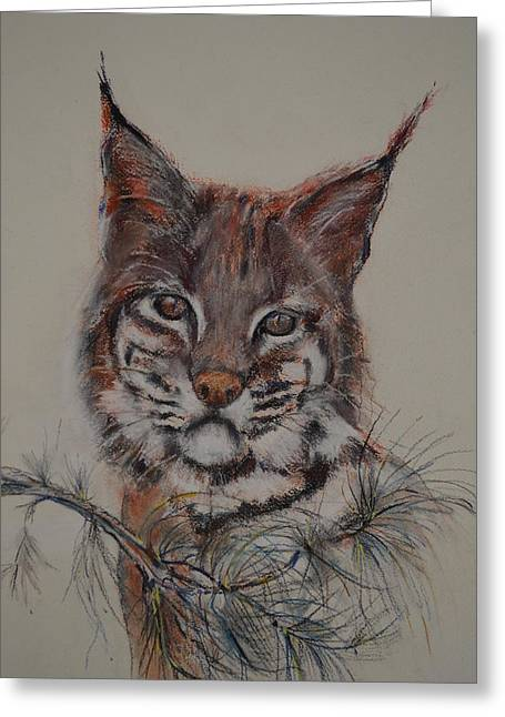 Bobcats Pastels Greeting Cards - Bobcat Greeting Card by Dorothy Campbell Therrien