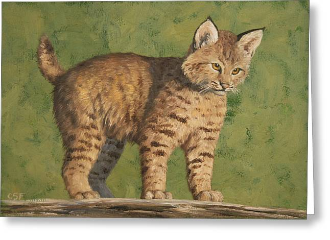 """wild Cat"" Greeting Cards - Bobcat Kitten Greeting Card by Crista Forest"