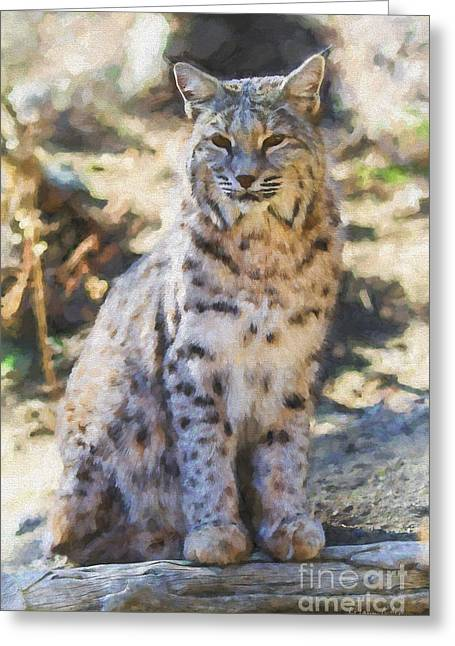 Bobcats Digital Art Greeting Cards - Bobcat Digital Painting Greeting Card by Dianne Phelps
