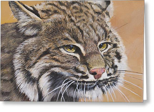 Bobcat Greeting Cards - Bobcat Portrait Greeting Card by Bill Dunkley