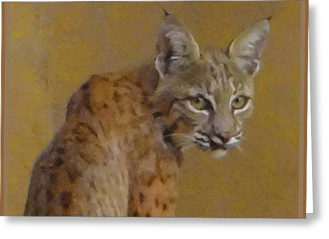 Bobcats Greeting Cards - Bobcat Portrait Greeting Card by Rick Lloyd