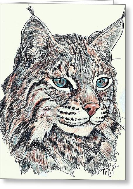 Bobcat Drawings Drawings Greeting Cards - Bobcat Portrait Greeting Card by VLee Watson
