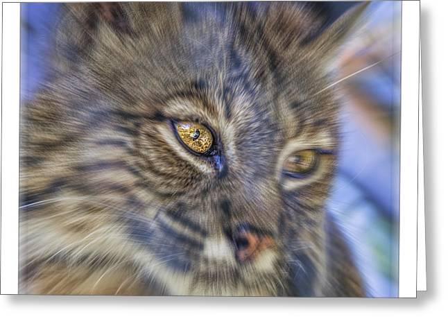 Bobcats Greeting Cards - Bobcat Radial Blur Greeting Card by LeeAnn McLaneGoetz McLaneGoetzStudioLLCcom