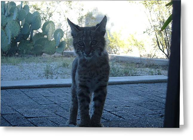 Kitty Kat Greeting Cards - Bobcat Greeting Card by Randal Higby