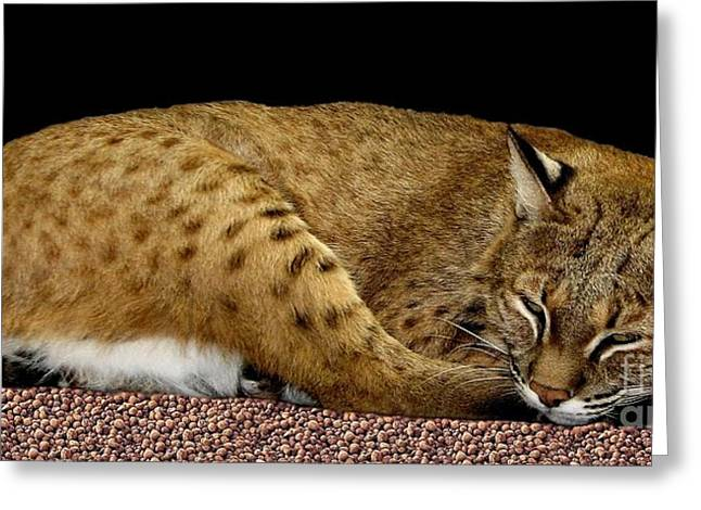 Hawk Creek Greeting Cards - Bobcat Greeting Card by Rose Santuci-Sofranko