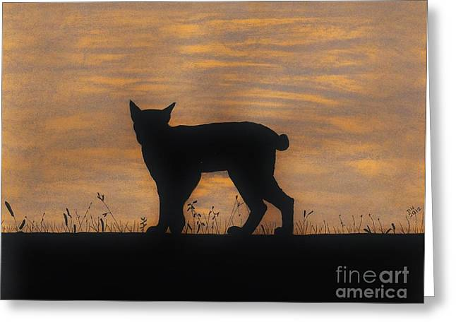 Bobcat Greeting Cards - Bobcat - Sunset Greeting Card by D Hackett