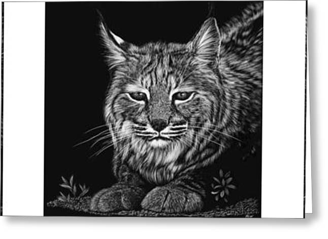 Bobcat Drawing Drawings Greeting Cards - Bobcat Triptych Greeting Card by Heather Ward