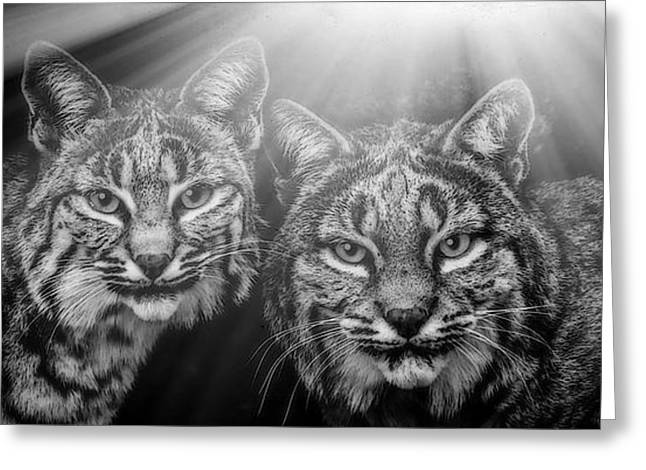 Best Sellers -  - Bobcats Mixed Media Greeting Cards - Bobcats Greeting Card by Elaine Malott