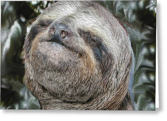 Tree Huggers Greeting Cards - Boca Sloth Greeting Card by Bruce Stanfield