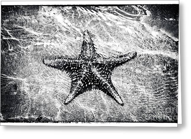 Boca Greeting Cards - Bocas Starfish  Greeting Card by John Rizzuto
