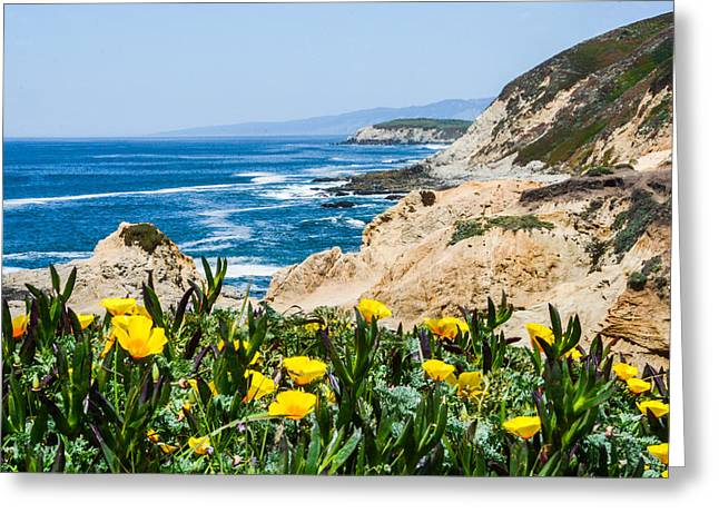 Recently Sold -  - Marin County Greeting Cards - Bodega Head Vista Greeting Card by Wally Taylor