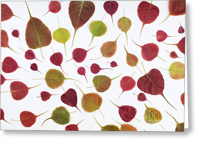 Ficus Greeting Cards - Bodhi Leaf Pattern Greeting Card by Tim Gainey