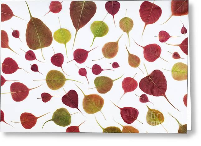 Bos Greeting Cards - Bodhi Leaf Pattern Greeting Card by Tim Gainey