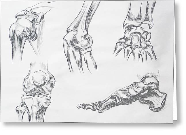 Elbows Greeting Cards - Body Parts anatomy Study Greeting Card by Irina Sztukowski