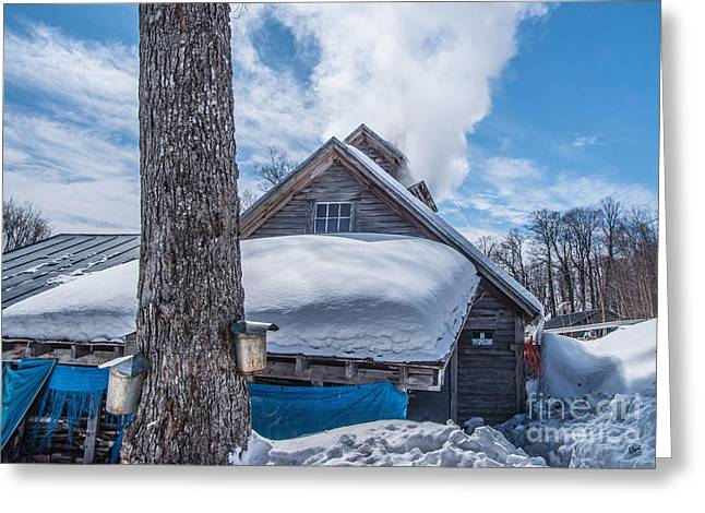 Maine Spring Greeting Cards - Boiling the Sap Greeting Card by Alana Ranney