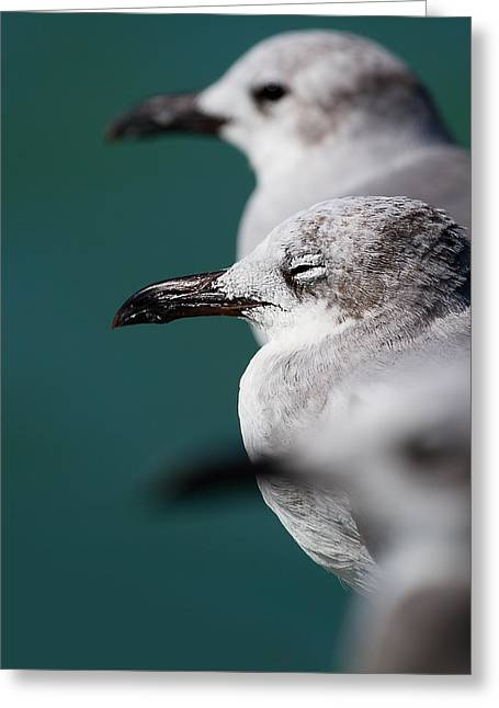 Purchase Greeting Cards - Bokehliceous Gulls Florida Keys Greeting Card by Mr Bennett Kent