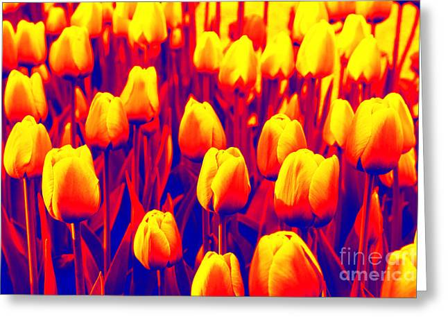 Floral Digital Photographs Greeting Cards - Bold Tulips Greeting Card by Carol Groenen