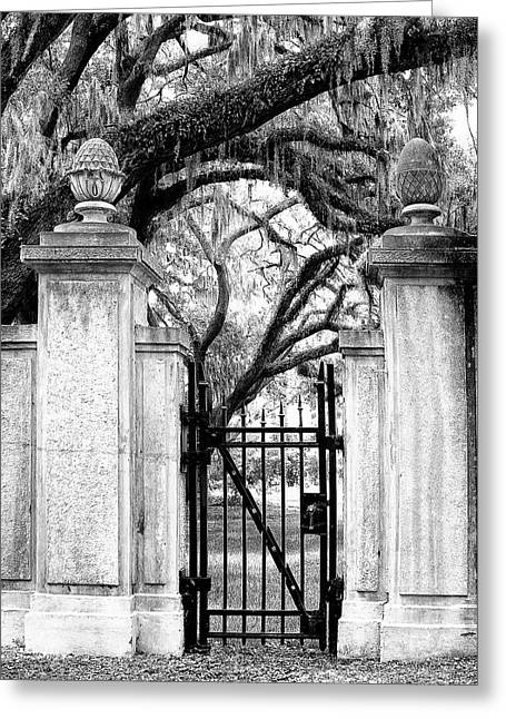 Bonaventure Cemetery Bw Savannah Ga Greeting Card by William Dey