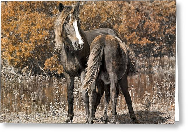 Feral Greeting Cards - Bond Greeting Card by Betsy C  Knapp
