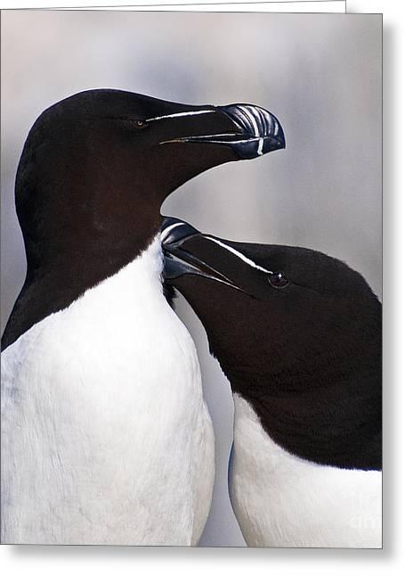 Bay Of Fundy Greeting Cards - Bonding.. Greeting Card by Nina Stavlund