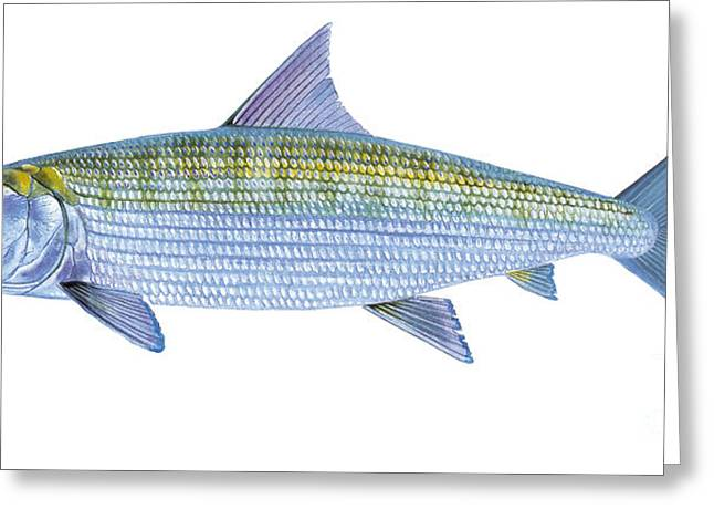 Bonefish Greeting Card by Carey Chen