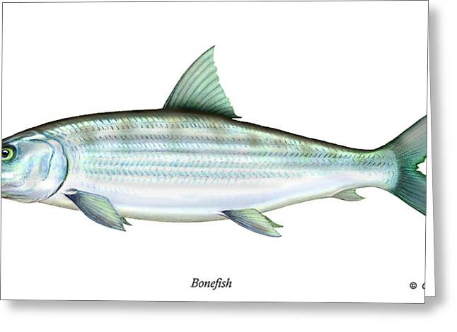 Bonefish Greeting Card by Charles Harden