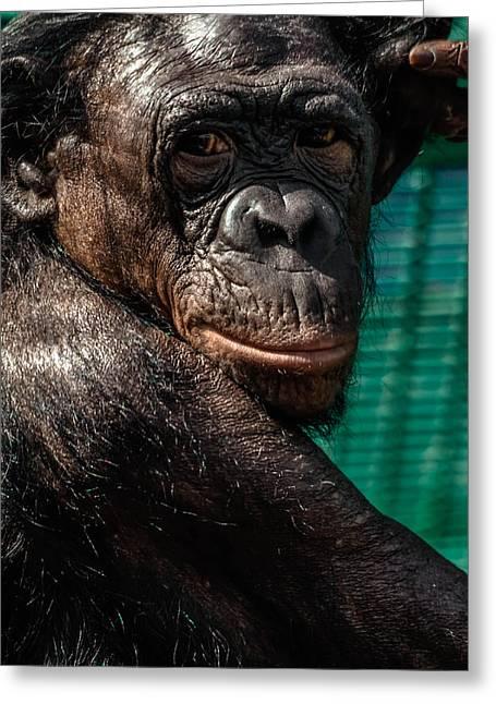 Humanlike Greeting Cards - Bonobo Monkey Greeting Card by Brian Stevens