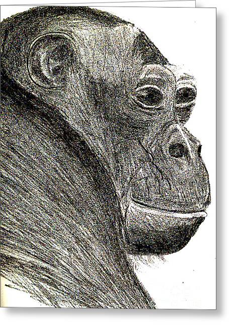Journal Drawings Greeting Cards - Bonobo Greeting Card by Sandy McIntire