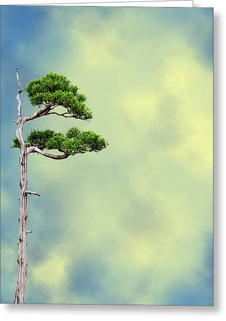 Bonsai Glow Greeting Card by John Haldane
